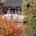 大池と紅葉