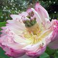 Photos: 花択から花が?