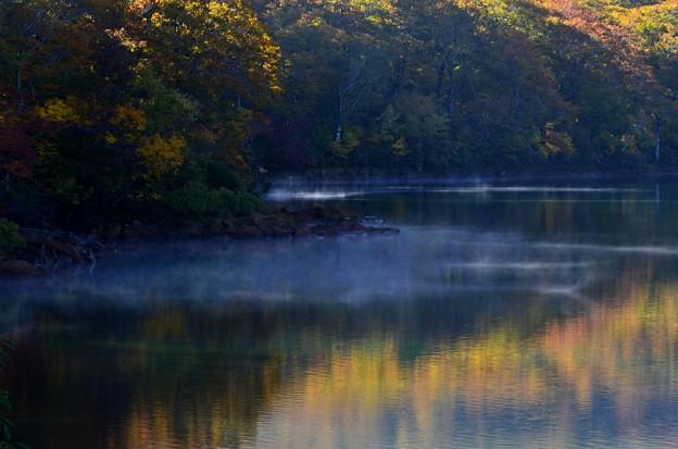 朝霧と紅葉模様