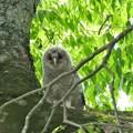 写真: やっと木の上に~1