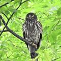 写真: 巣穴近くで見守るお母さん