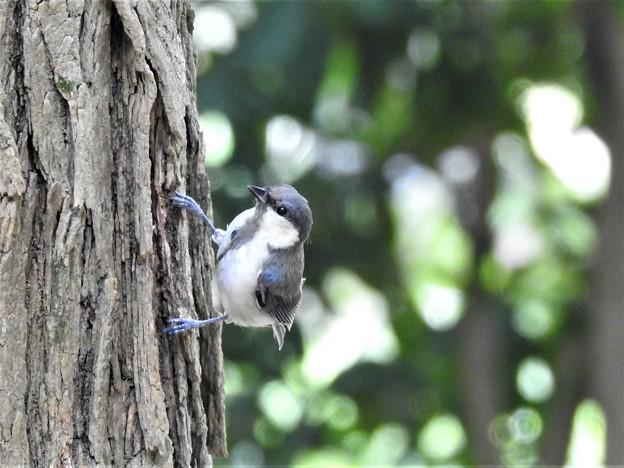 可愛い幼鳥2