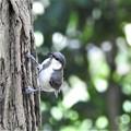 Photos: 可愛い幼鳥2