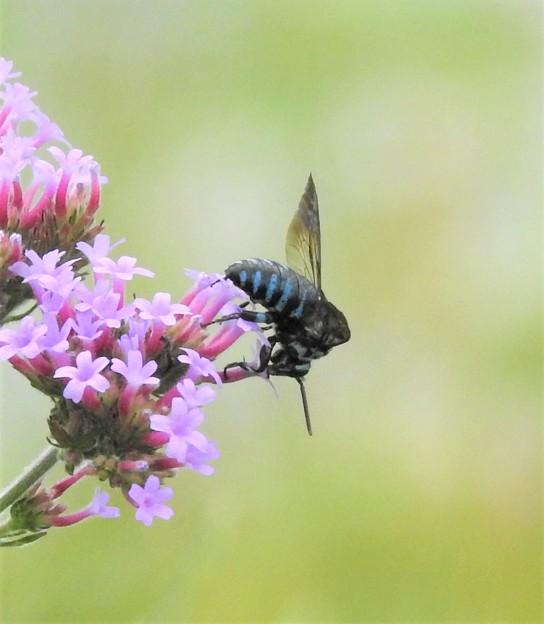 幸せを呼ぶ青い蜂3
