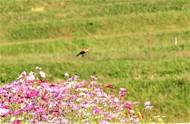 飛翔(証拠写真)