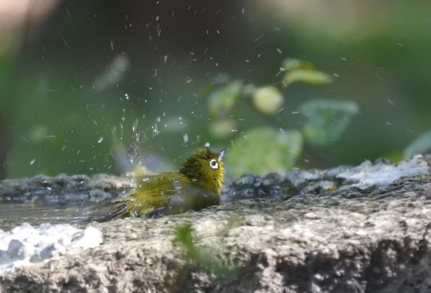 お城の水場-2