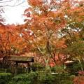 写真: 汎庵・万里庵の紅葉