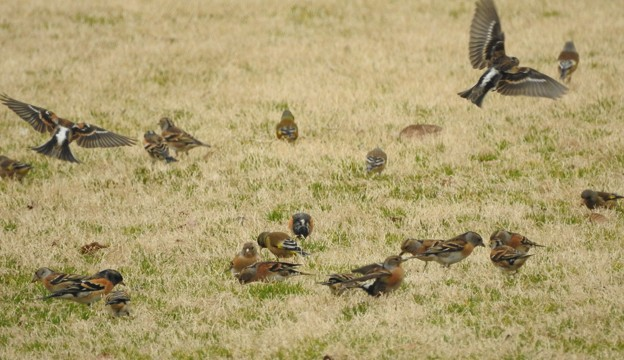 群団で採餌-3