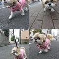 写真: ピンクでお散歩