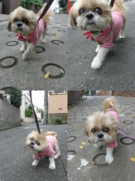 ピンクでお散歩2