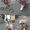 写真: ピンクでお散歩2