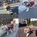 Photos: 1月の散歩2