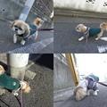 Photos: 1月の散歩4