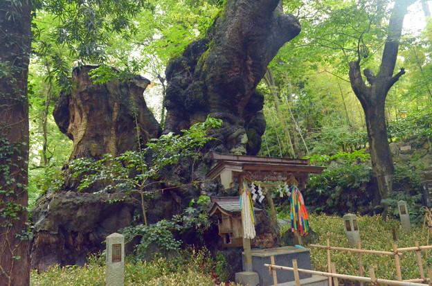 樹齢二千年