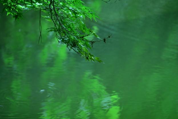 新緑の深み