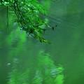 写真: 新緑の深み