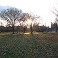 Photos: 亀戸中央公園 夕方