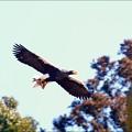 写真: 今日の猛禽