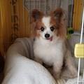 Photos: パピちゃん