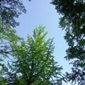 新緑_杉村公園14