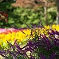 彩り:秋風景19