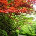 写真: 杉村公園新緑04