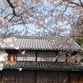 Photos: 故郷:紀伊風土記丘桜01