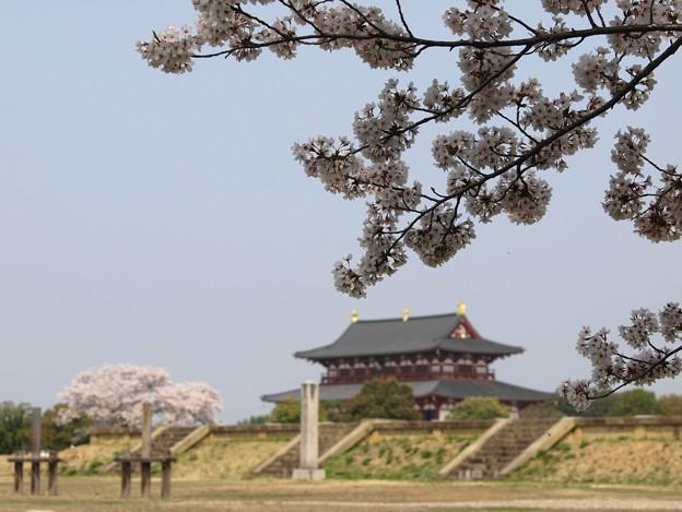 平城宮跡桜10