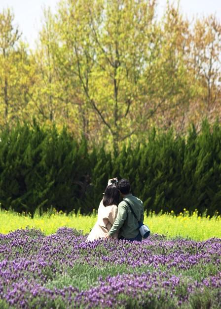 写真: 人生の春:ラベンダー01