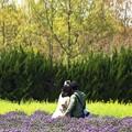 Photos: 人生の春:ラベンダー01