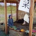 写真: 市の再現:平城京天平祭04