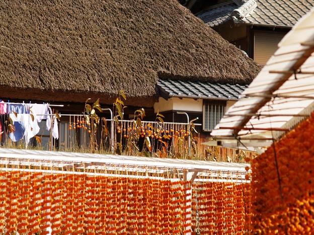 写真: 串柿の里07