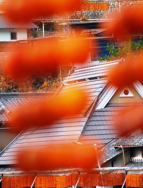 Photos: 串柿の里05