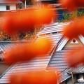 写真: 串柿の里05
