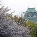 Photos: 大阪城桜