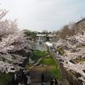 日本初水力発電所:蹴上インクライン桜04