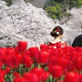春の佳き日:植物園桜06