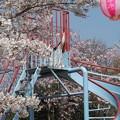 Photos: 桜の滑り台:丸高稲荷神社桜03