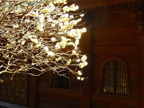 鎌倉英勝寺