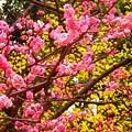 名古屋徳川庭園