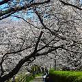 写真: 滋賀県草津市