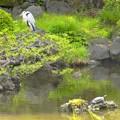 鷺亀~日比谷公園