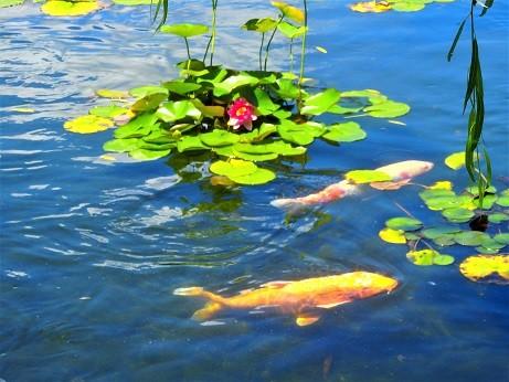 写真: 徳川庭園の池