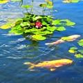 徳川庭園の池