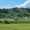 写真: 夏のゲレンデ~上越新幹線から