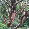 写真: 高輪プリンス庭園