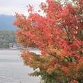 紅葉~河口湖