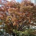 Photos: 紅葉~大阪中ノ島