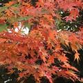紅葉~鶴ヶ丘八幡宮