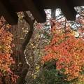 写真: 紅葉~鎌倉 報国寺